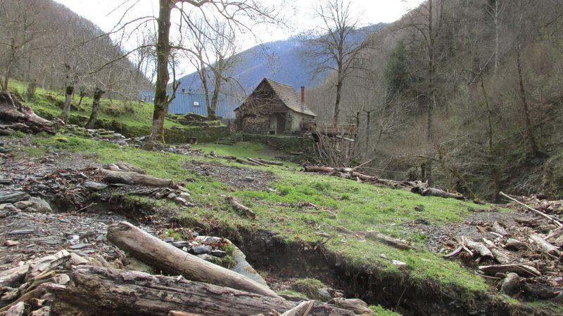Refuge forestier isard-19