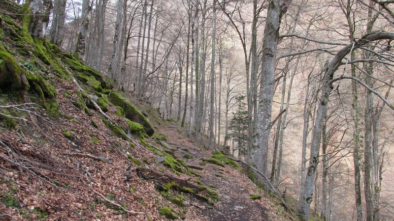 Refuge forestier isard-30