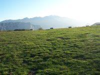 Pla de Montcamp