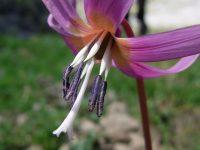 Découverte de la Faune et de la Flore en montagne de Badet