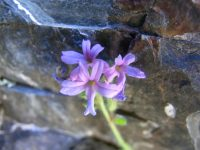 Florilège de 1200 à 1700 mètres d'altitude