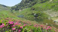 L'étang bleu par sous l'estang et les trois du Tirou et le long