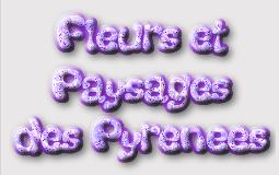 Fleurs & Paysages des Pyrénées